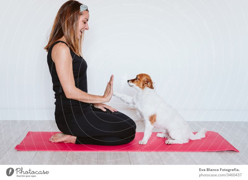 cute small jack russell dog lying on a yoga mat at home with her owner woman. Healthy lifestyle indoors pet together sport exercise healthy female body