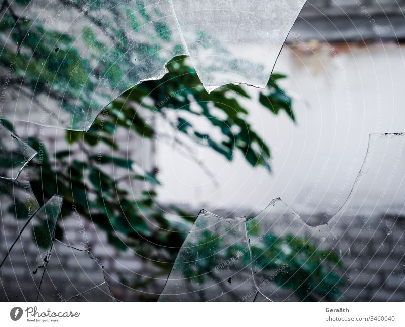 view of a tree branch through a broken dirty glass air wall blur blurred broken glass cracked damaged gravel green leaves sharp