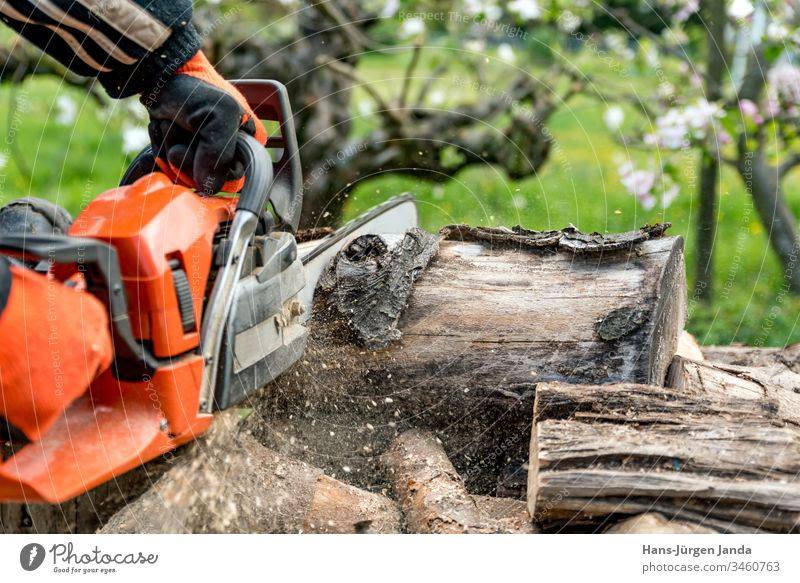 Man saws firewood with a red chainsaw chain saw wood saw wood chips fireplace woodworking oven falls tree accident prevention fuel Industry wood industry saw up