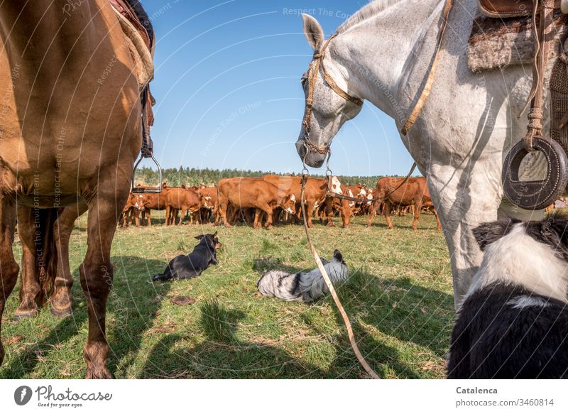Cattle, dogs and horses take a break on a hot summer day in the pampas cattle Animal Summer Meadow Sky Beautiful weather Grass Nature Day Green Landscape