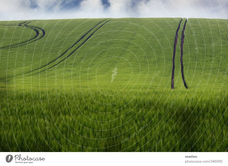 driving style Landscape Plant Sky Clouds Horizon Spring Climate Weather Beautiful weather Agricultural crop Field Green Traffic lane Grain field Colour photo