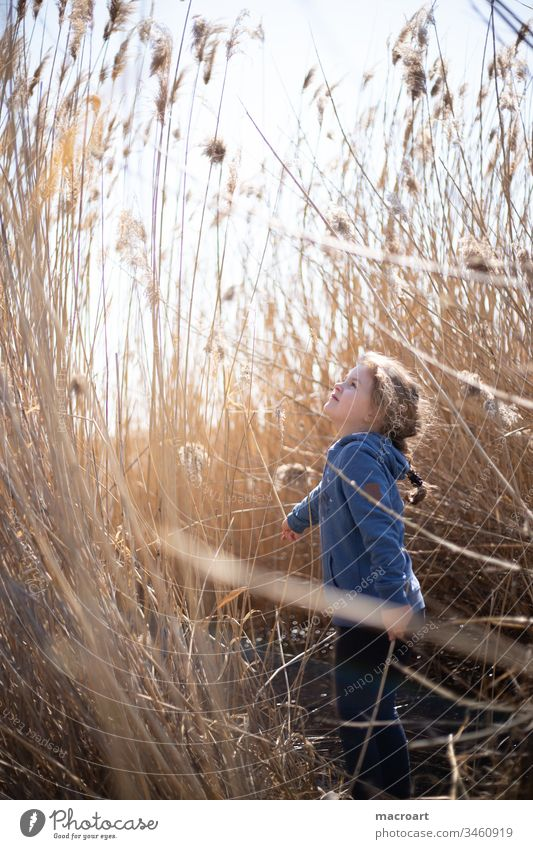 Child playing in the reeds by the lake plays Lake Exterior shot Nature Colour photo Landscape Water spring Lakeside Deserted covid19 school closures Free