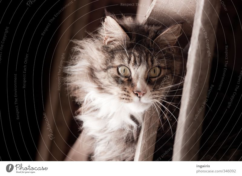 cat's eyes Animal Pet Cat Animal face Pelt Domestic cat Cat eyes 1 Rung Ladder Looking Exceptional Natural Brown Gray Black Moody Sympathy Mystic Wood