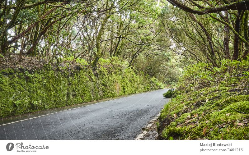 Road in Macizo de Anaga reserve, Tenerife, Spain. road forest travel UNESCO biosphere reserve scenery mysterious asphalt nature trip Canary Islands view scenic