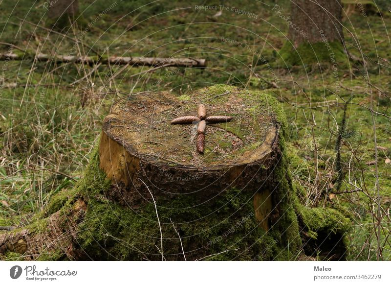 The cross is laid out on a stump of fir cones background pattern wood brown nature textured abstract yellow cut forest life natural organic ring section shape