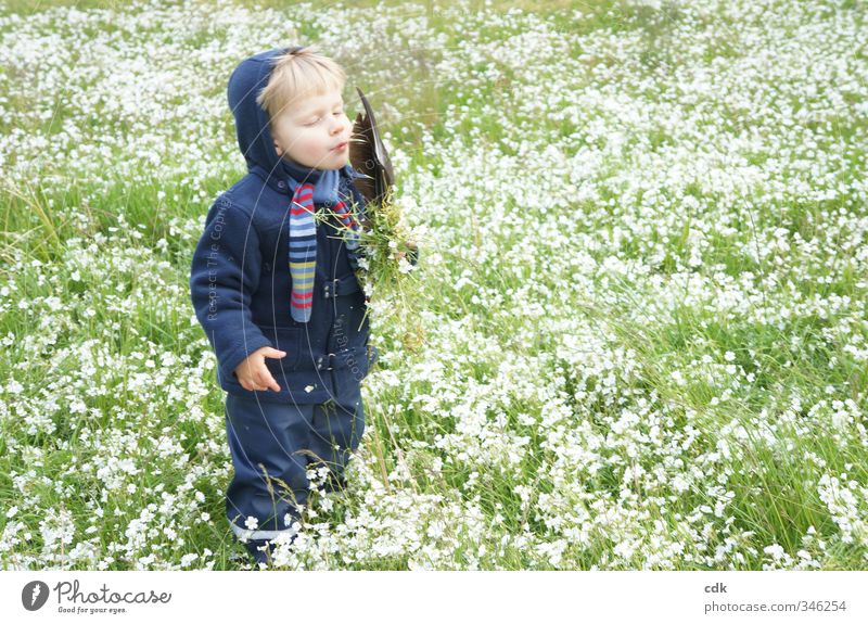 Farewell to summer Human being Child Toddler Boy (child) Infancy 1 3 - 8 years Environment Nature Landscape Spring Autumn Garden Park Meadow Jacket Scarf