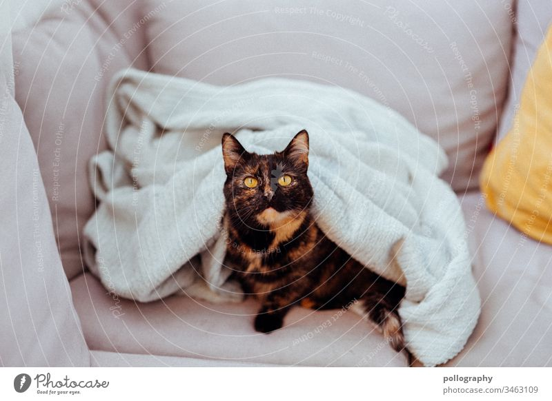 Cat is under a blanket book cover motif cateye Cat's head Animal Pet Pelt Animal portrait Domestic cat Colour photo Observe Animal face pink Pink Tulle