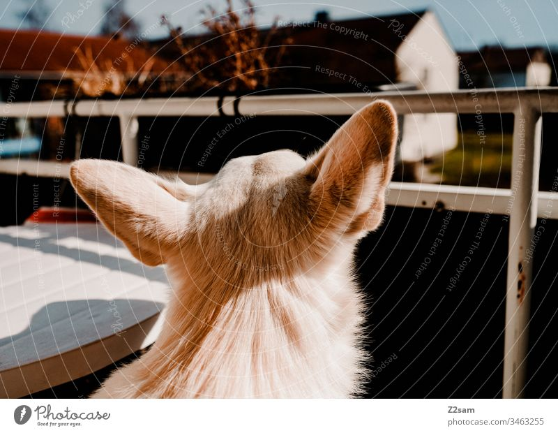 Output restriction Dog Shepherd dog Head ears Balcony Village Idyll outlook see Walk the dog Far-off places Longing Animal Exterior shot Pet Colour photo