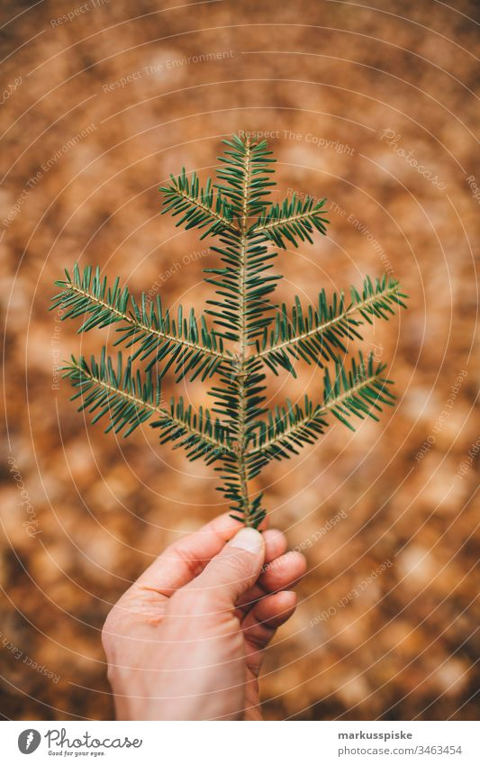 Fir branch in hand Green Foliage plant Nature outdoor bokeh outline Silhouette leaves Fir tree Fir needle Hand Retentive stop Ground