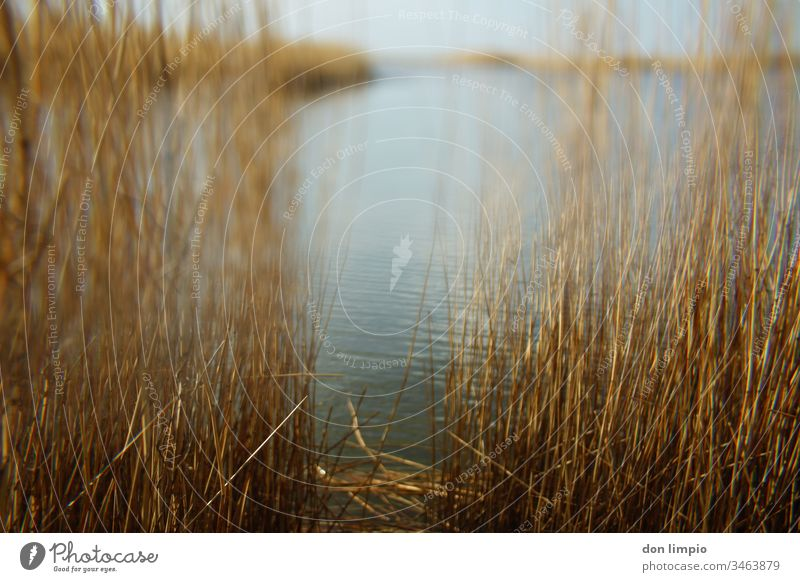 Selective focus on the beach lake landscape Shore of a pond Pond reed Nature Exterior shot Landscape Water Prism Plant Colour photo Shallow depth of field