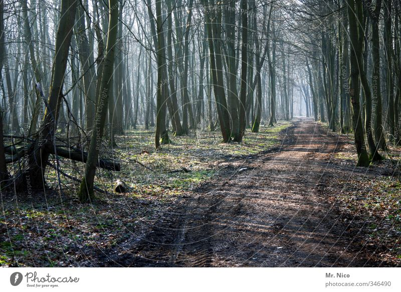 the direction is right Environment Nature Landscape Autumn Winter Plant Tree Forest Hiking Footpath Fog Forestry Forest road Moss Natural Relaxation Calm