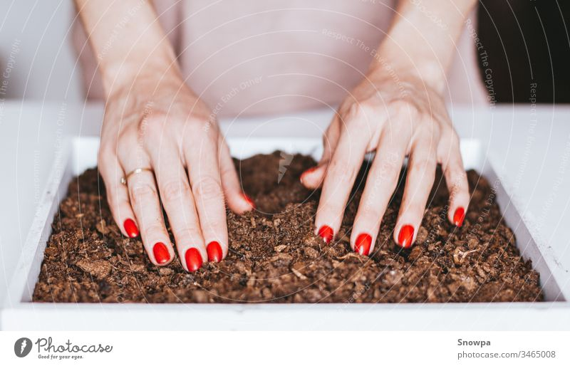 Close-up of a young woman's hands planting seeds in soil. Eco living. pot gardening home nature green spring gardener agriculture table natural flower flowerpot