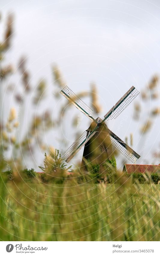 historical windmill behind blurred grasses in front of blue-grey sky Mill Windmill Historic Old Wallholland Field Cornfield Grass Colour photo Architecture