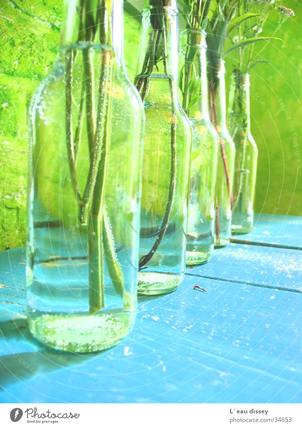 Flower Drops of water Fresh Decoration Bottle Vase Photographic technology Meadow flower