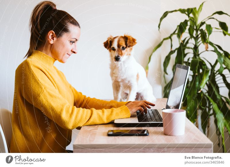young woman working on laptop at home, wearing protective mask, cute small dog besides. work from home, stay safe during coronavirus covid-2019 concpt pandemic