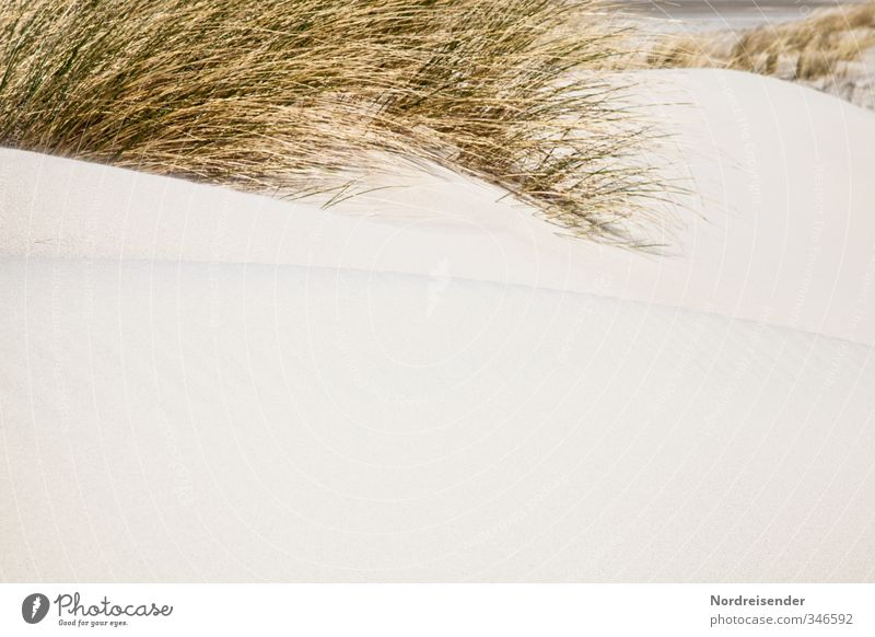 dunes Vacation & Travel Summer Summer vacation Beach Ocean Nature Plant Grass Coast North Sea Sand Retro Yellow Wanderlust Relaxation Marram grass Dune
