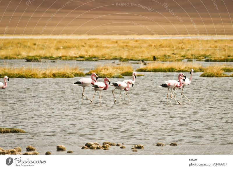 flamingoes Summer Environment Nature Landscape Elements Earth Climate Beautiful weather Lakeside Desert Oasis Animal Wild animal Bird Flamingo Group of animals