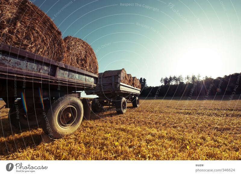 field wagon Grain Summer Agriculture Forestry Environment Nature Landscape Sky Horizon Beautiful weather Warmth Agricultural crop Field Vehicle Truck Trailer