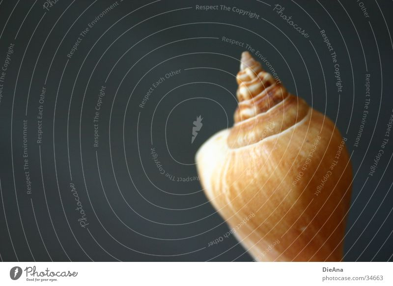 White Blue Ocean Style Gray Sand Brown Background picture Decoration Things Mussel Smoothness Beige Housing