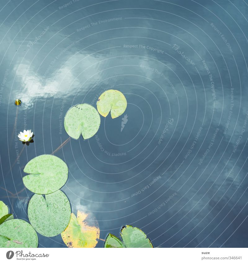 pond dweller Lifestyle Style Wellness Harmonious Well-being Contentment Relaxation Meditation Environment Nature Elements Water Sky Plant Leaf Blossom Pond Lake