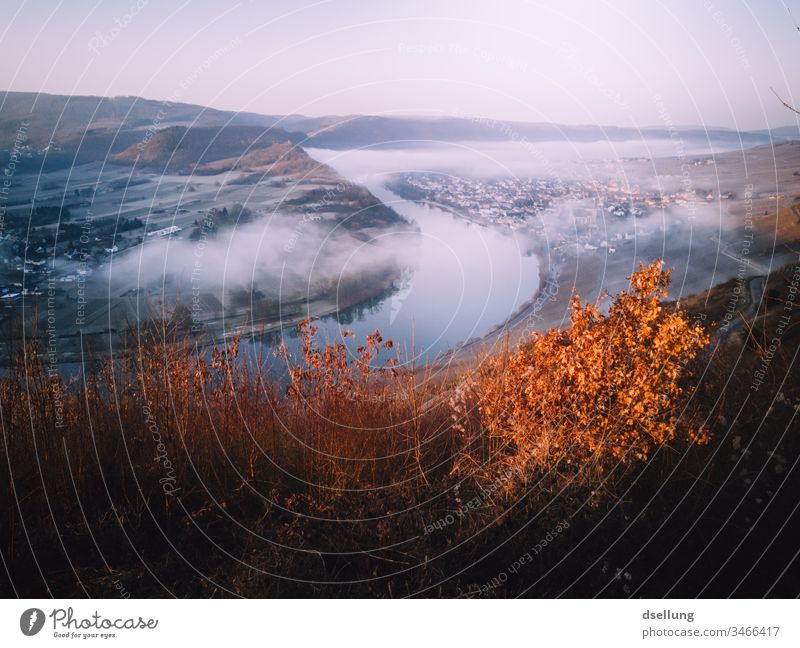 Moselle from above, in a light mist with autumn colours Autumn Autumnal Autumnal colours Mosel (wine-growing area) Moselle valley Wine growing Colour photo