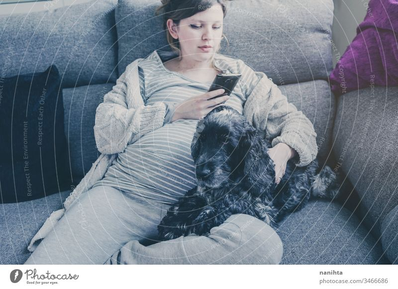 Young pregnant woman with her dog home quarantine mom family sofa friendship domestic domestic animal cocker spaniel life lifestyle single alone isolation real