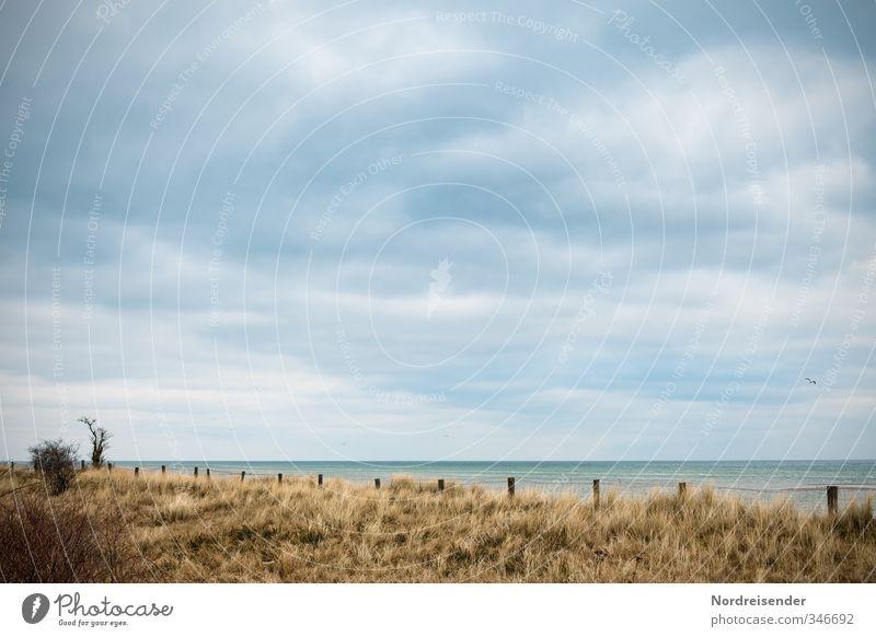 Baltic Calm Trip Far-off places Beach Ocean Landscape Plant Sky Clouds Autumn Climate Wind Tree Grass Bushes Coast Baltic Sea Wet Dry Blue Brown Wanderlust