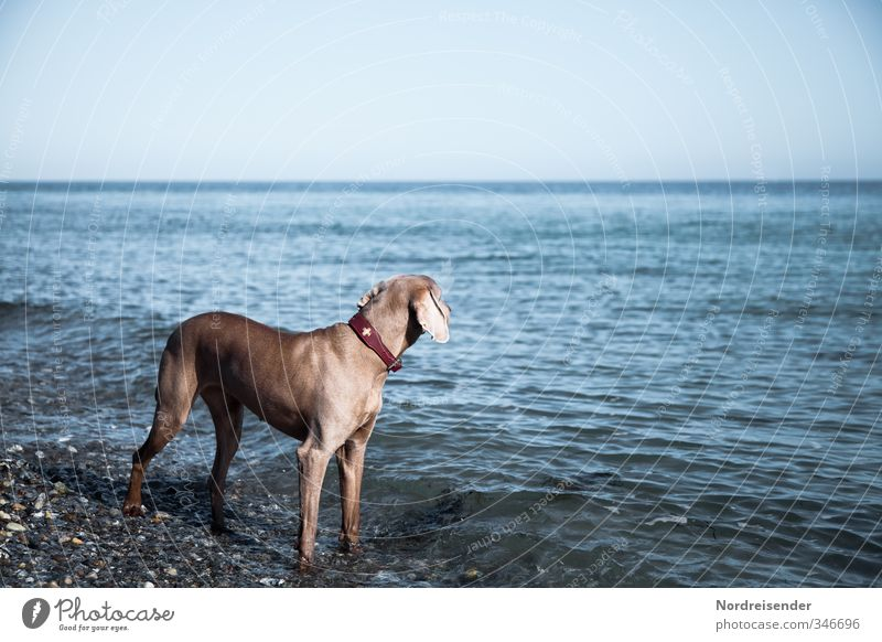 Longing for the sea.... Life Relaxation Calm Hunting Beach Ocean Beautiful weather Coast Baltic Sea Animal Pet Dog Water Observe Vacation & Travel Stand