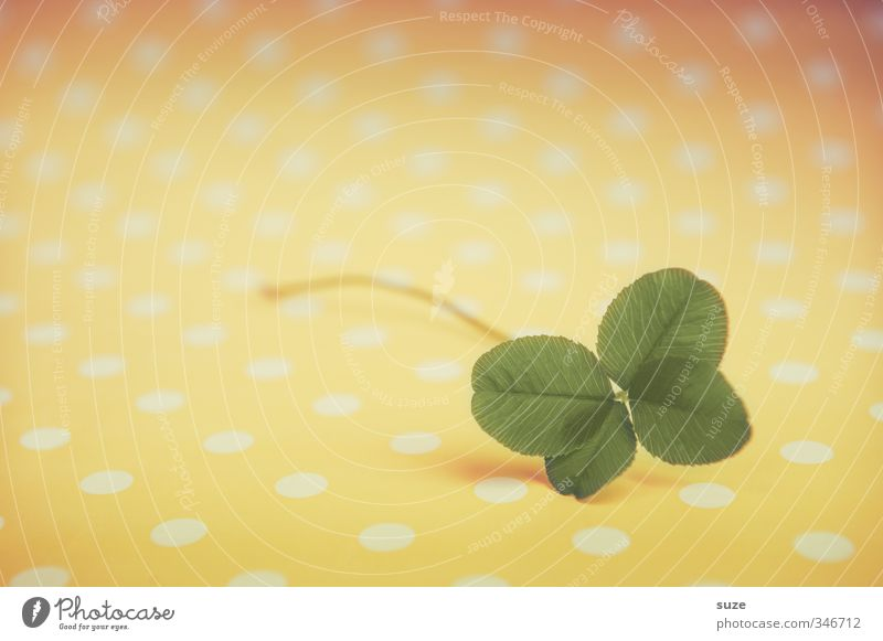 Little luck Lifestyle Happy Plant Leaf Sign Small Cute Yellow Green Happiness Anticipation Success Popular belief Four-leaved Cloverleaf Lottery