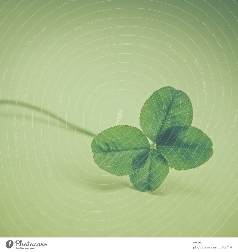 A matter of pure luck Lifestyle Plant Leaf Sign Small Green Happy Anticipation Success Four-leaved Four-leafed clover Good luck charm Desire Game of chance