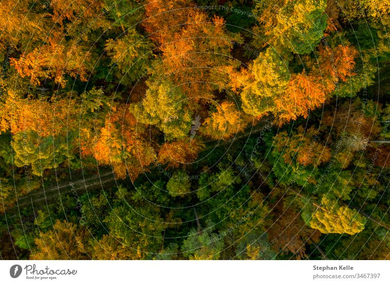 Top View Of Colourful Trees In The Autumn Season Beauty In Nature A Royalty Free Stock Photo From Photocase