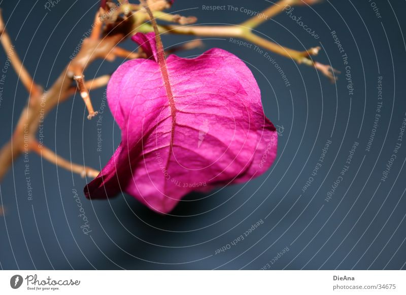 Blue Flower Pink Twig Houseplant