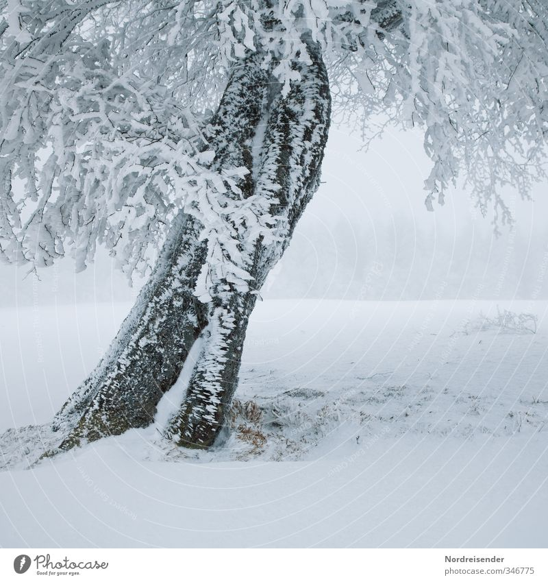 White Plant Tree Loneliness Landscape Calm Winter Cold Life Snow Ice Weather Power Fog Climate Frost