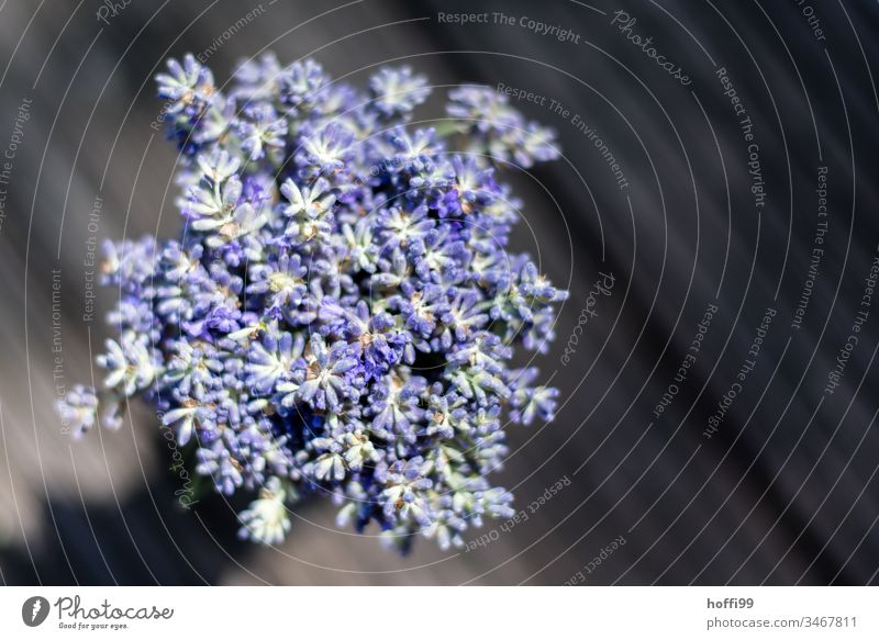 Lavender in sunlight from above lavender blossom Violet Green Medicinal plant Flower Summer Blossom Nature Fragrance Plant Odor Natural Beautiful Comforting