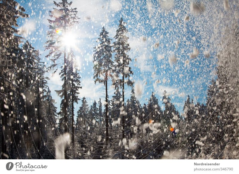 snow kitsch Life Winter Snow Winter vacation Climate Beautiful weather Snowfall Tree Forest Relaxation Friendliness Happiness Kitsch Anticipation Optimism