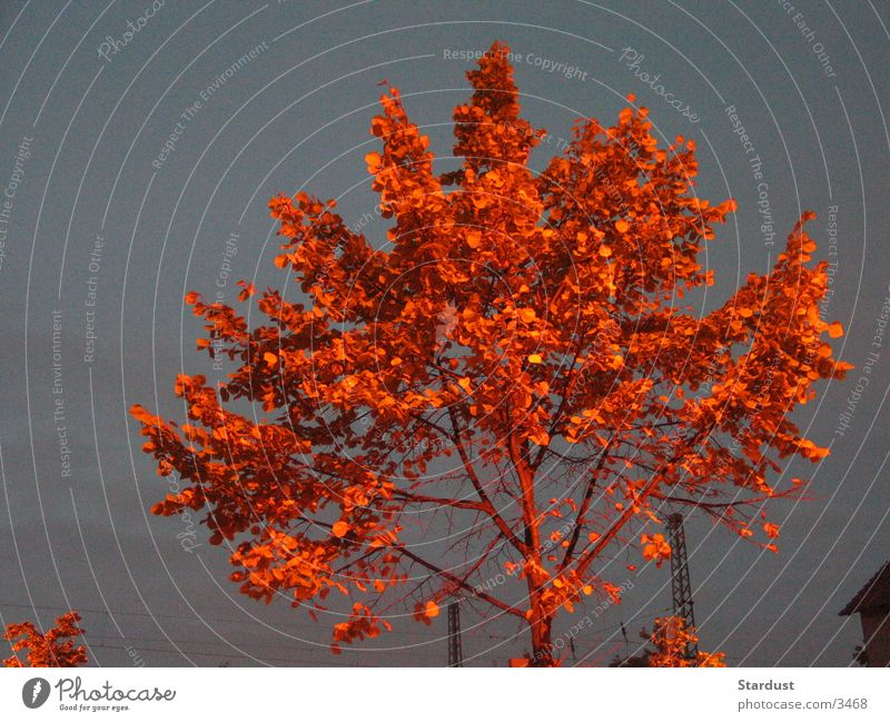 burning tree Tree Leaf Twilight Red Evening Lamp