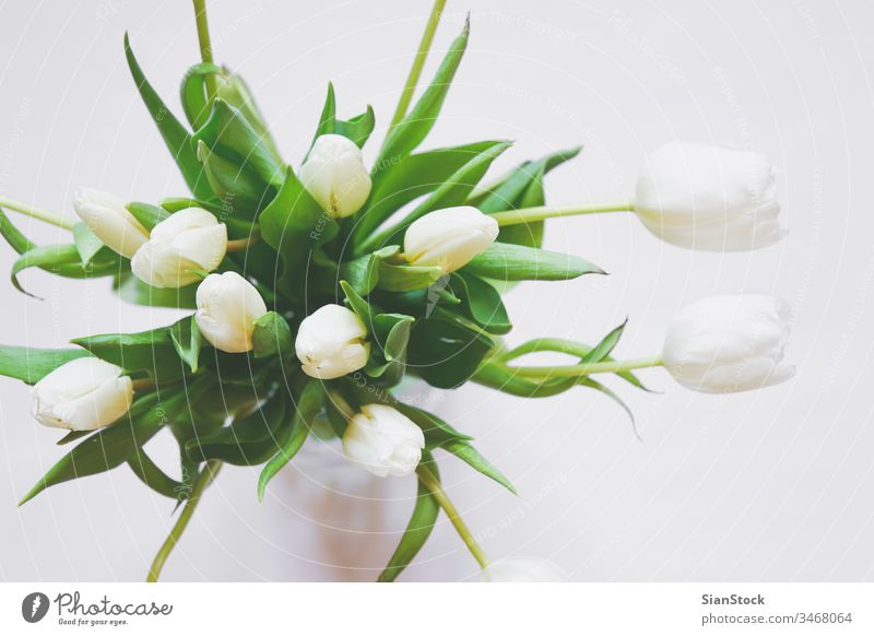 Bouquet of white tulips in a vase isolated background day bouquet spring nature green beautiful flower mothers space bunch beauty gift floral flowers plant copy