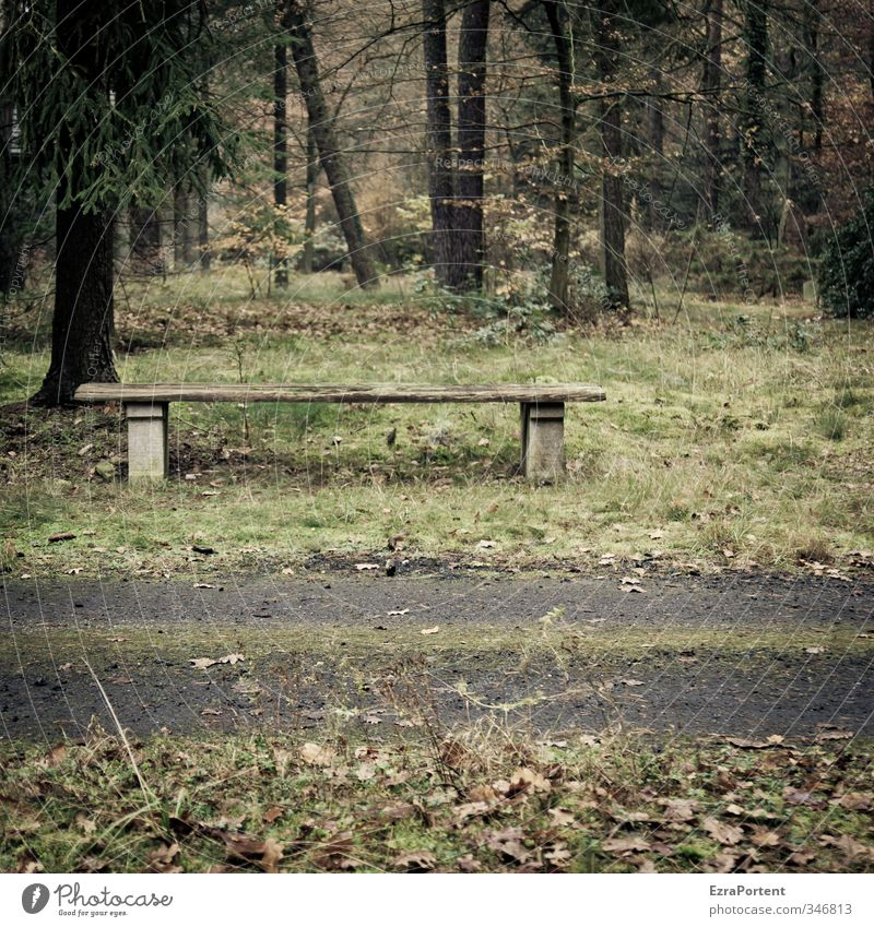 rest Environment Nature Landscape Plant Autumn Tree Grass Park Forest Lanes & trails Wood Relaxation Dark Brown Green Sadness Loneliness Bench Calm Rest