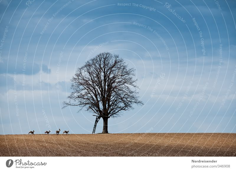 Hunting scene without hunters Sky Autumn Beautiful weather Tree Field Animal Wild animal Group of animals Animal family Running Walking Jump Blue Brown Movement