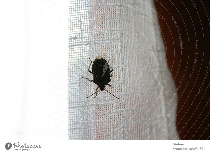 House (Residential Structure) Window Insect Obscure Drape Anonymous Beetle Hideous Foreign Antagonism Window frame