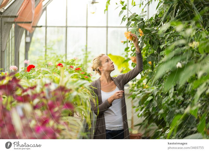 Florists woman working in greenhouse. gardening florist gardener plant flower nature female young beautiful people adult lady blossom girl nursery farm worker