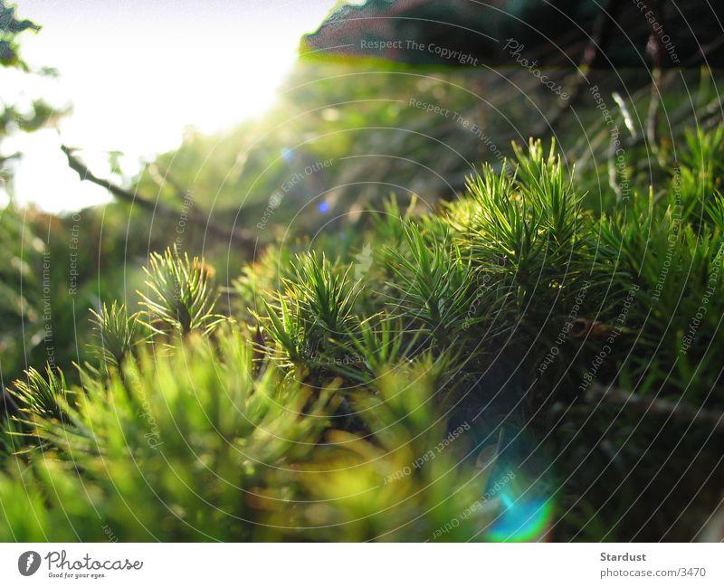 Forest Grass Moss