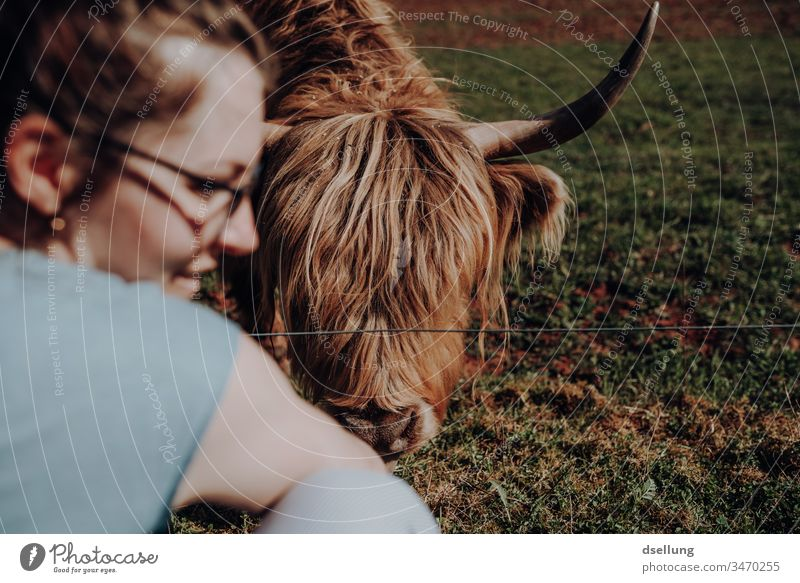 A young woman is happy because the Scottish highland cattle, or simply a cow, has eaten the food she gave her Hand Cute Beautiful Soft Pelt Caress Pedestrian