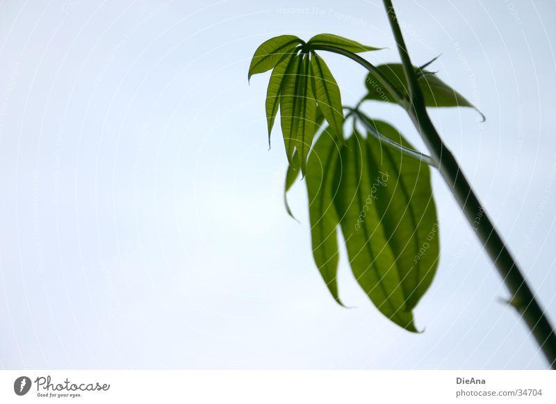 Nature Green Life Stalk Vessel Houseplant