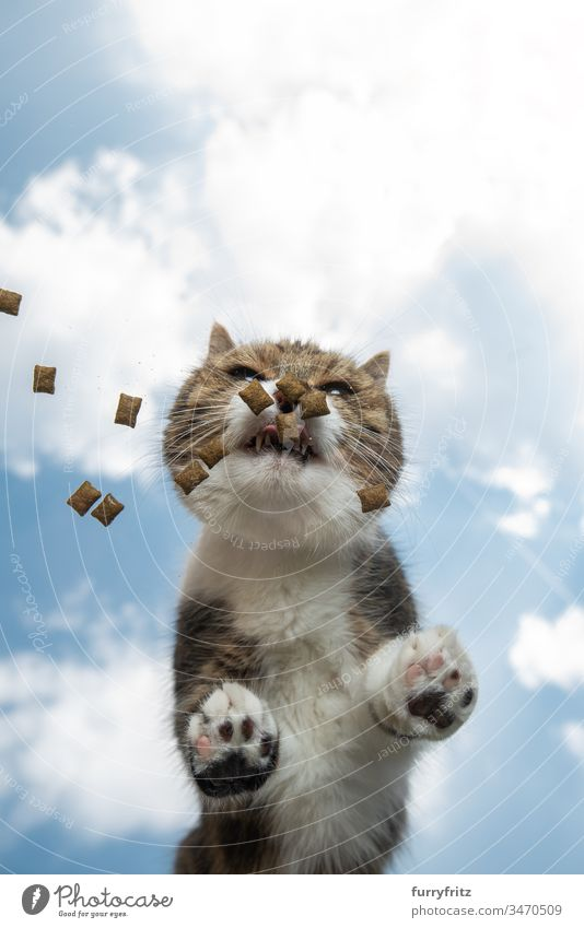 Cat eating treats on a glass table in the open air Copy Space bottom view cloud landscape Sky sunny Sunlight Summer Outdoors Paw Hairy Toe Beans pets
