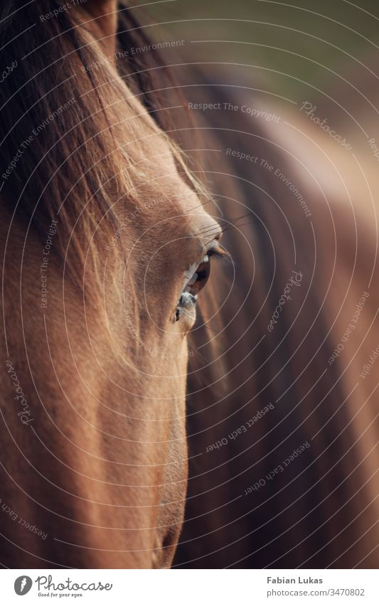 Horse with eye in focus Eyes Mane Brown Nature Close-up Exterior shot Animal portrait Looking