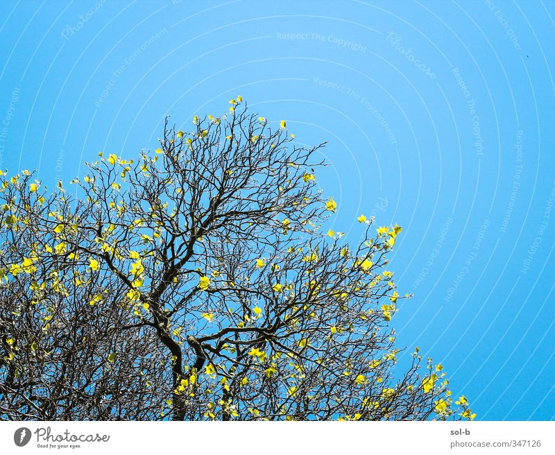 Branching Nature Vacation & Travel Blue Summer Tree Joy Leaf Yellow Healthy Bright Natural Air Park Beautiful weather Free Fresh