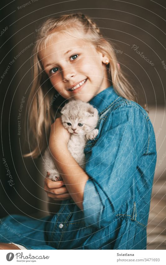Girl hugs and plays a british little kitten portrait beautiful caucasian beauty pretty blue woman model cheerful studio dress attractive one adorable american