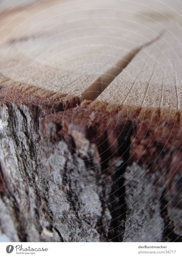 Wood is! Thread Tree bark Annual ring Structures and shapes chopping block Column Macro (Extreme close-up) Tree trunk