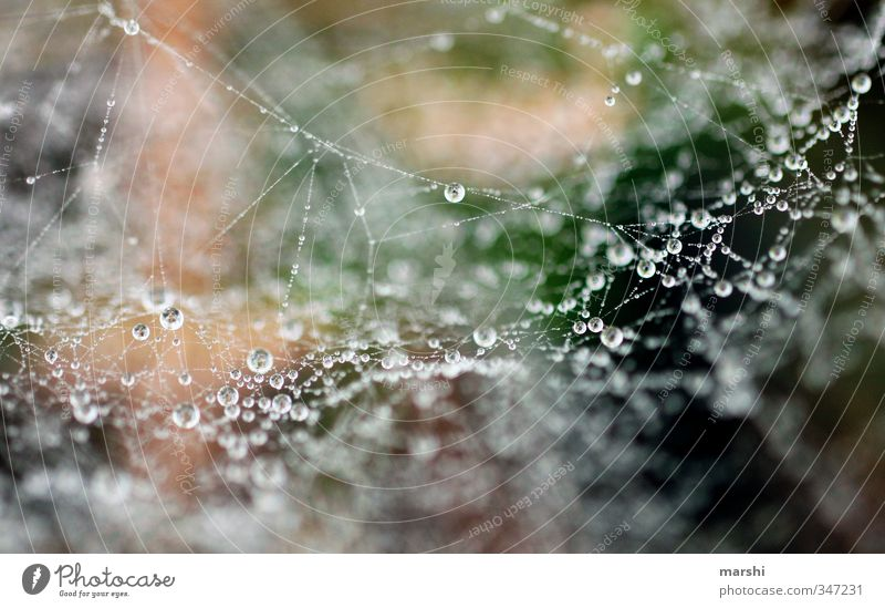 morning dew Nature Plant Autumn Winter Weather Grass Brown Green Drops of water Spider's web Dew Glittering Colour photo Exterior shot Close-up Detail
